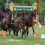 Driving to the Top:  Live Oak International Combined Driving Delivers Star Power Across Divisions