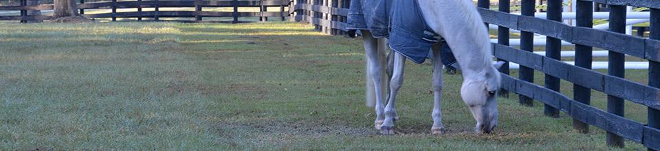 Equestrian Show Schedule