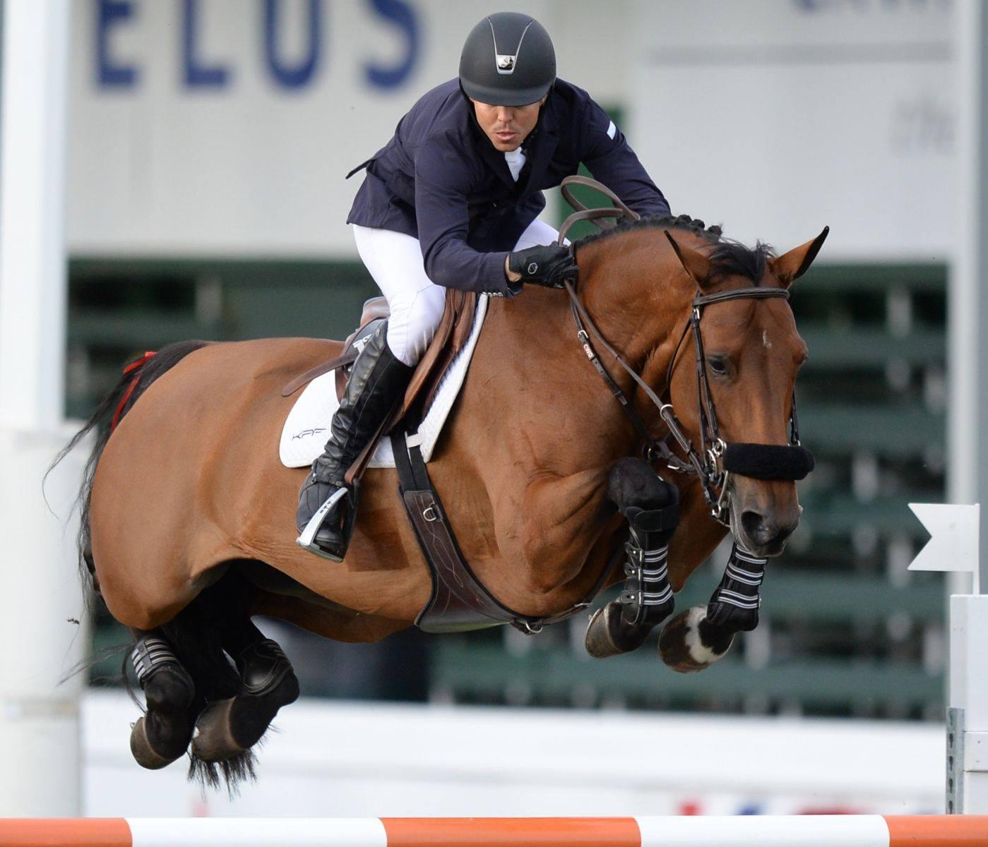 Live Oak International To Host U.S. Debut of Flanders Foal Auction