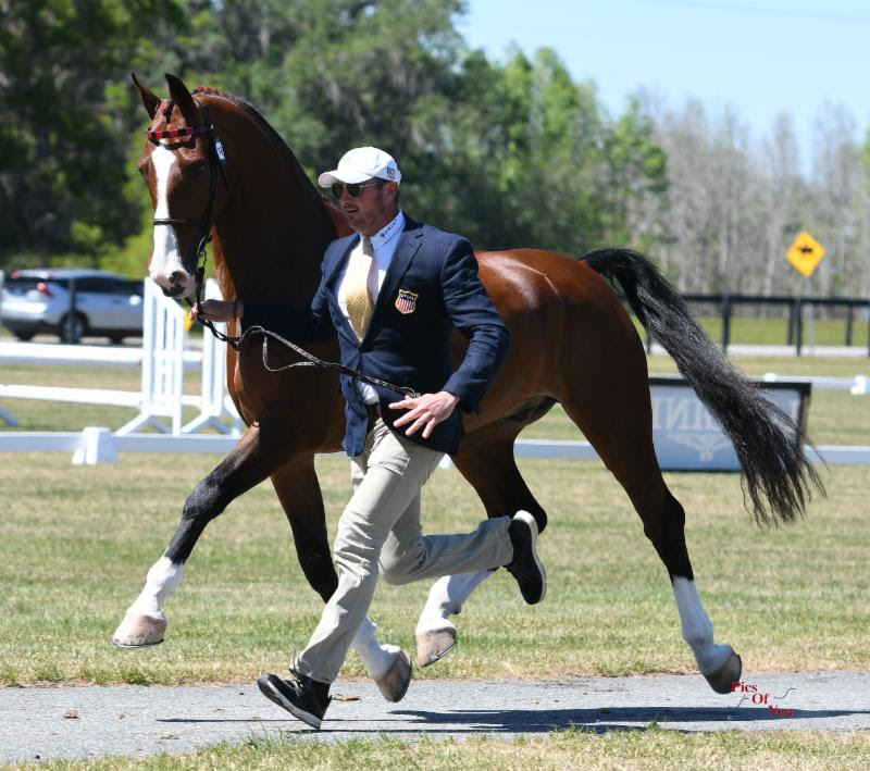 Combined Driving Horse Inspection Kicks Off 2018 Live Oak International