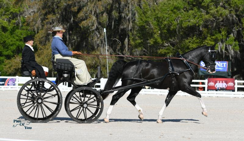 Thompson, Whittington and Wright Lead USEF Combined Driving National Championships at Live Oak International After Friday's Dressage